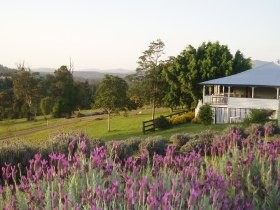 Blue Ridge Lavender Farm And Retreat - Southport Accommodation