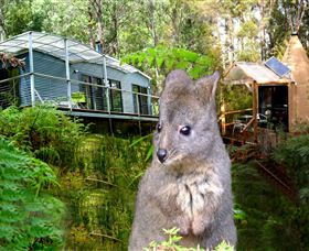 Huon Bush Retreats - Southport Accommodation