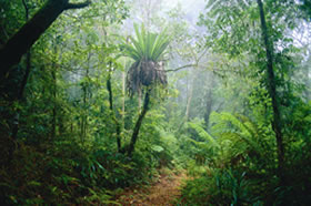 Lamington National Park and OReillys - Southport Accommodation
