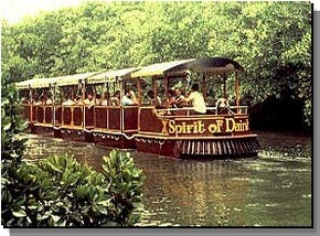 Daintree Rainforest River Trains - Southport Accommodation