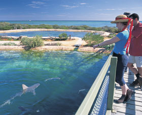 Shark Bay Marine Park - Southport Accommodation
