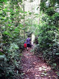 Malanda Falls Rainforest Walk Malanda Falls Conservation Park - Southport Accommodation