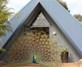 Halls Gap Zoo - Southport Accommodation
