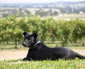 Moothi Estate Vineyard and Cellar Door - Southport Accommodation