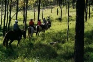 Hunter Valley Horse Riding and Adventures - Southport Accommodation