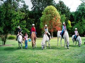 Limestone Coast Horseriding - Southport Accommodation