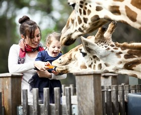 Taronga Western Plains Zoo Dubbo - Southport Accommodation