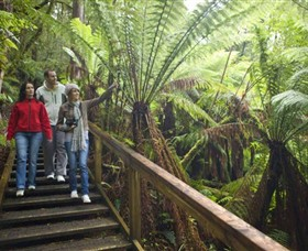 Otway Fly Treetop Adventures - Southport Accommodation