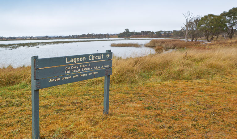 Lagoon Circuit walking track - Southport Accommodation