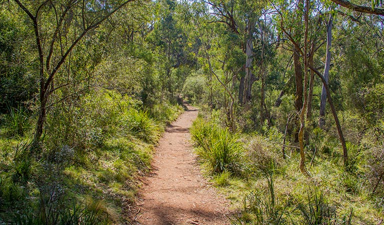 Mares Forest Creek walking track - Southport Accommodation