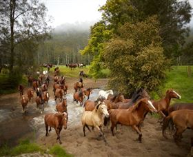 Glenworth Valley Horse Riding - Southport Accommodation