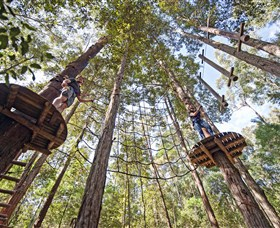 TreeTop Adventure Park Central Coast - Southport Accommodation