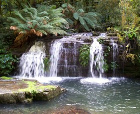 Barrington Tops National Park Walks - Southport Accommodation