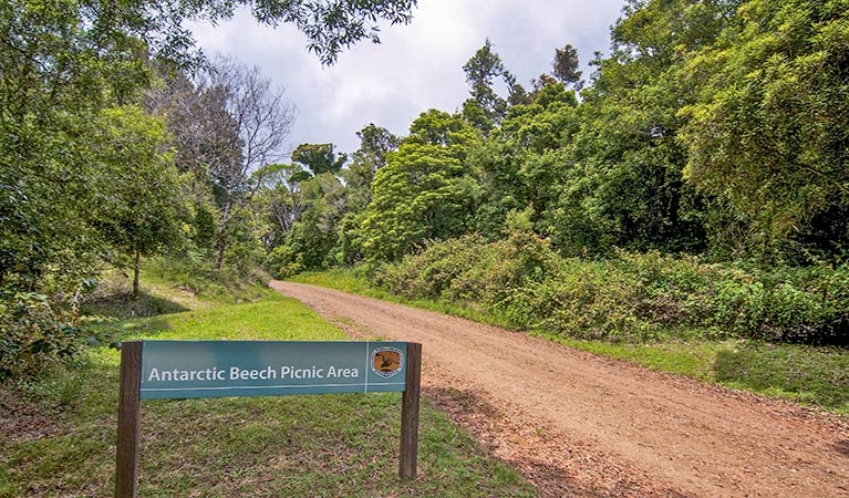Antarctic Beech picnic area - Southport Accommodation