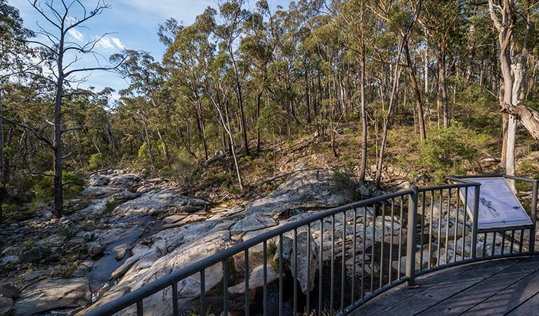 Myanba Gorge walking track - Southport Accommodation