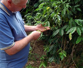 Wombah Coffee Plantation - Southport Accommodation