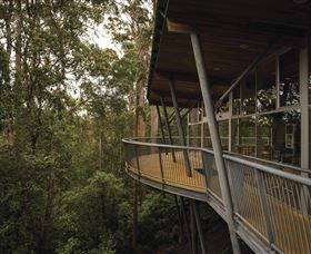 Tarkine Forest Adventures - Dismal Swamp - Southport Accommodation