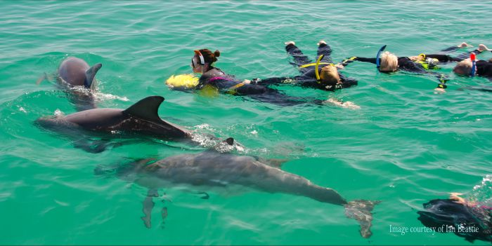 Rockingham Wild Encounters - Swim with Wild Dolphins - Southport Accommodation