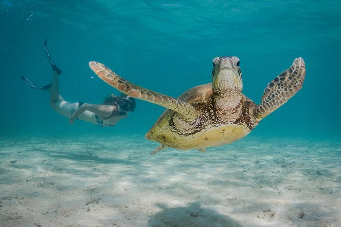 Marine Life Discovery & Lagoon Snorkeling Tour from Exmouth