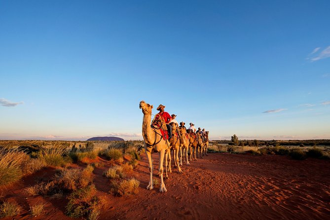 Uluru Camel Express Sunrise or Sunset Tours