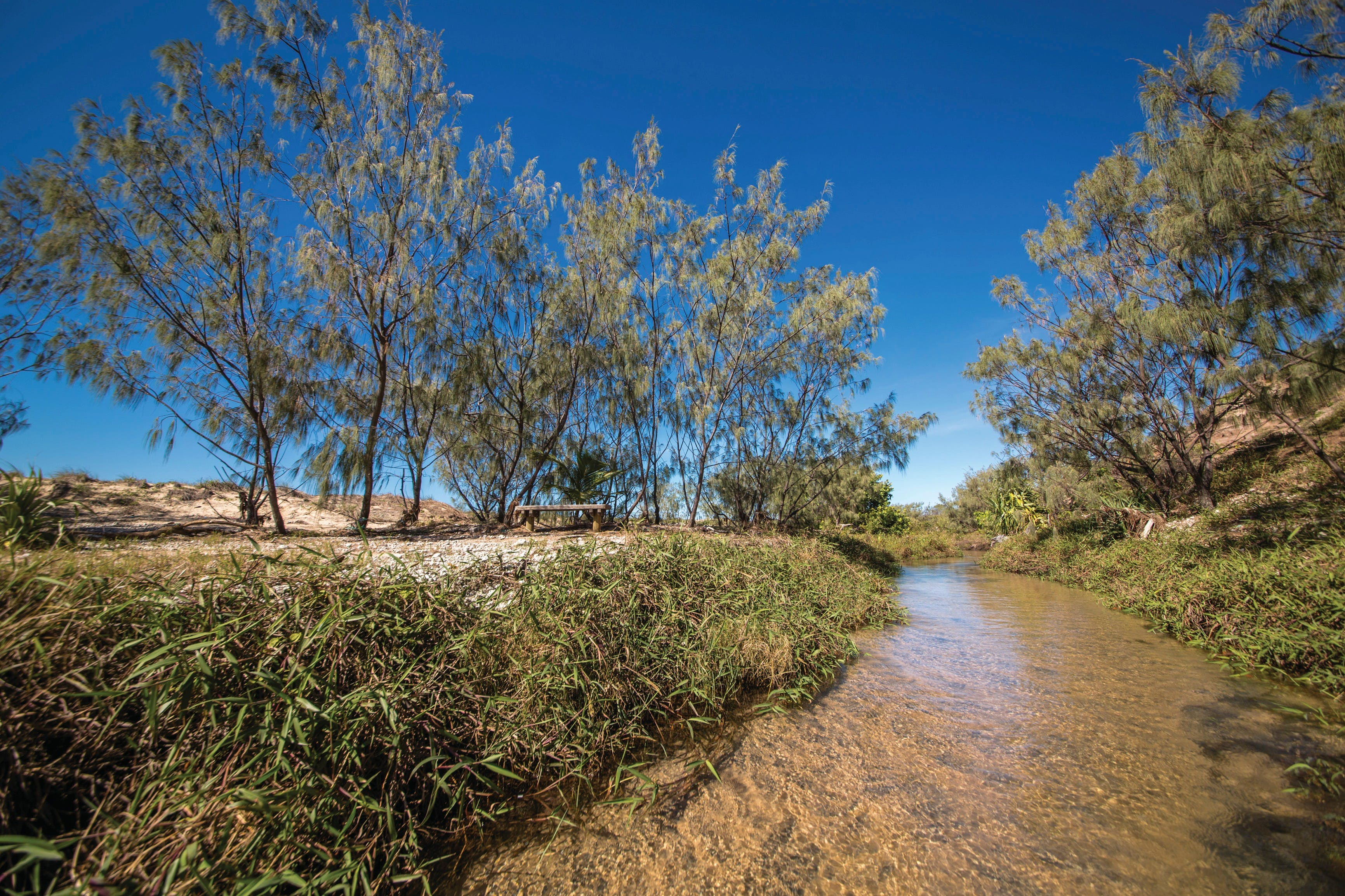 Freshwater Creek Track Byfield National Park - Southport Accommodation