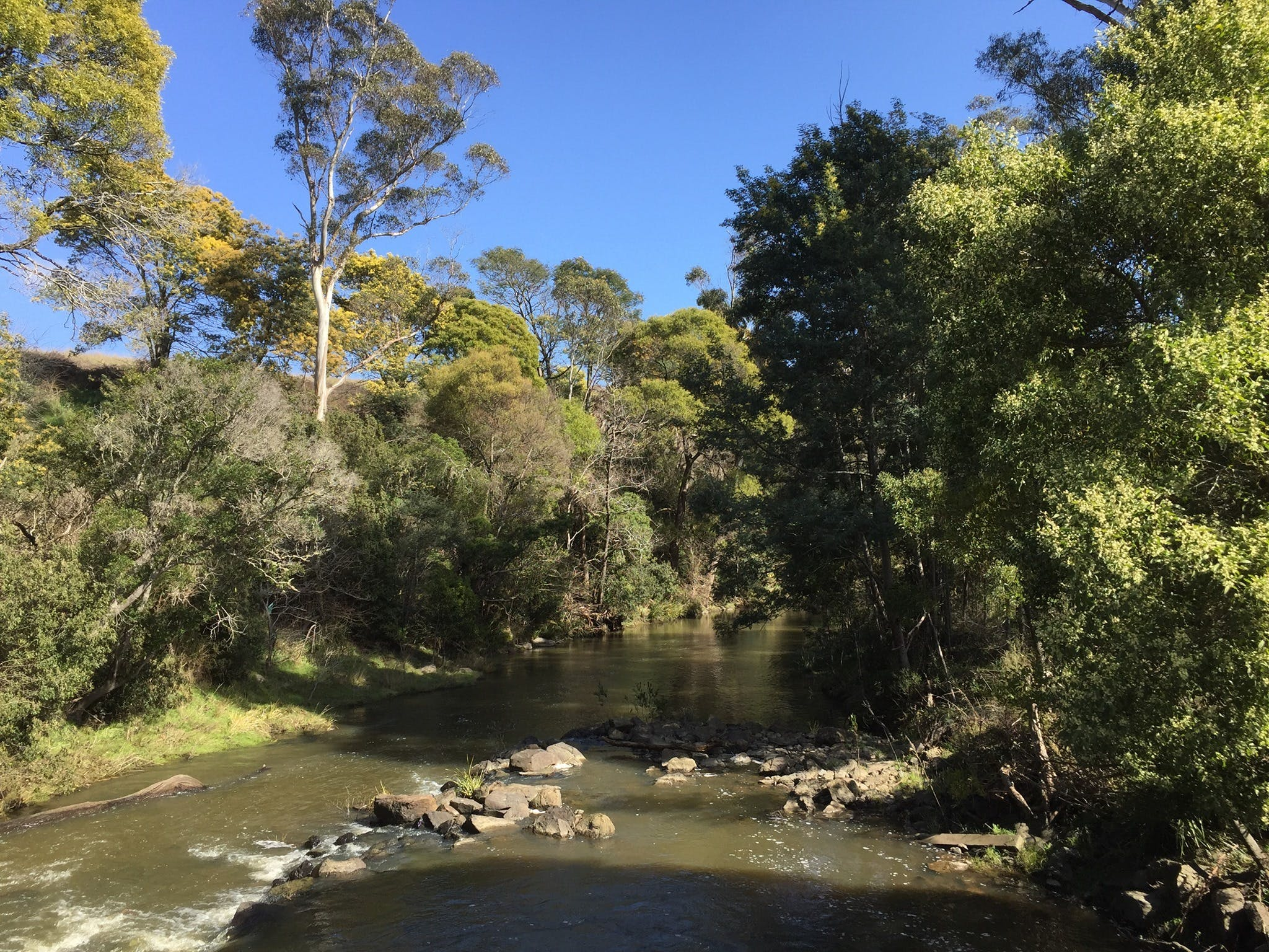 Pipers River Board Walk - Southport Accommodation