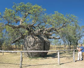 Boab Prison Tree - Southport Accommodation