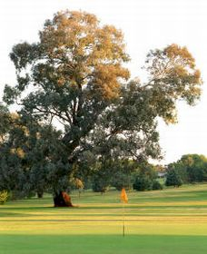 Cowra Golf Club - Southport Accommodation