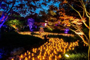 Canberra Nara Candle Festival - Southport Accommodation