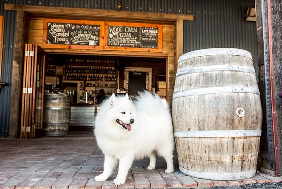 Smiling Samoyed Brewery - Southport Accommodation